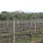poggio vineyard 5